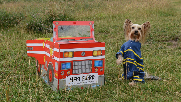 Three-legged Yorkshire Terrier releases third calendar for fire service